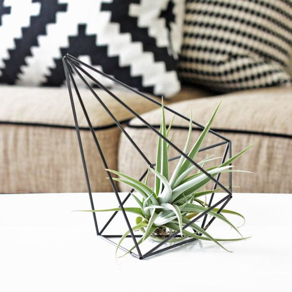 Geometric plant display